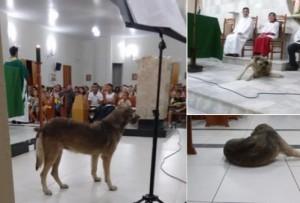 A cadela gostava de ficar na Igreja e é conhecida nacionalmente