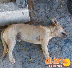 Cachorrinho foi achado morto próximo ao Xamegão
