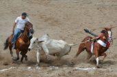 Vaqueiros derrubam boi em vaquejada