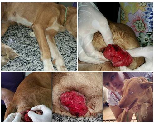 Homem é acusado de estuprar cadela na cidade de Cajazeiras